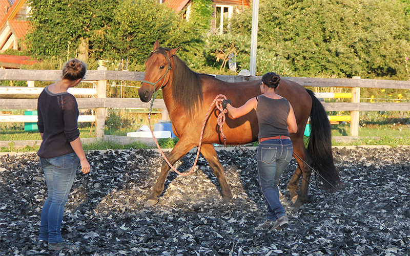 Training bei Vivian Gabor