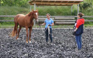 Jungpferde-Training bei Vivian Gabor