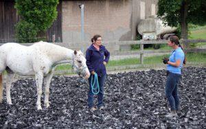 Pferdetraining mit Vivian Gabor