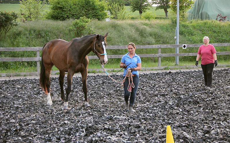 Pferdetraining Dr. Vivian Gabor